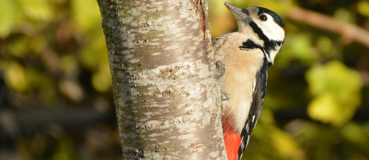 Could woodpeckers hold the key to avoiding sporting brain injuries?