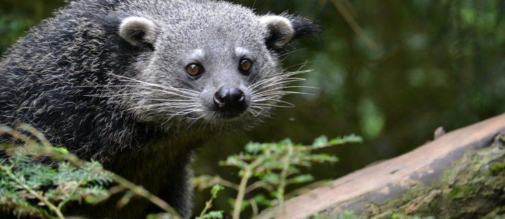 Facebook's illegal wildlife trade problem