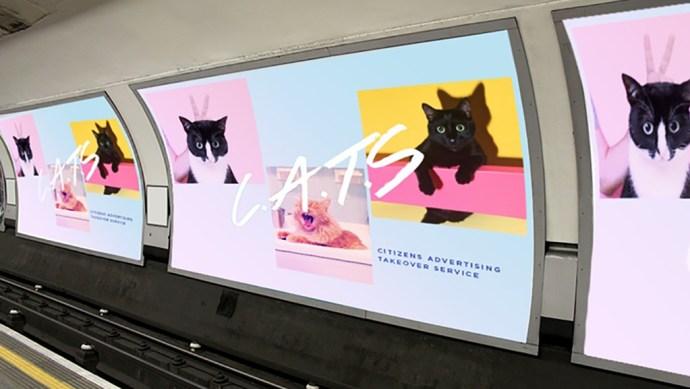 kickstarter_cats