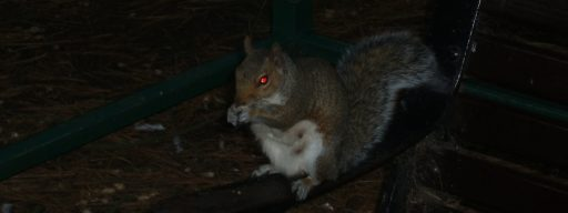 squirrels_hacked_more_power_plants_than_humans