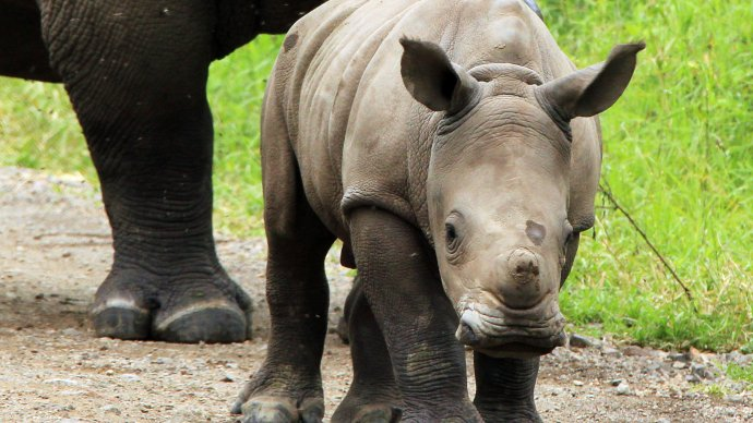 the_clever_tech_keeping_south_african_rhinos_alive_-_8