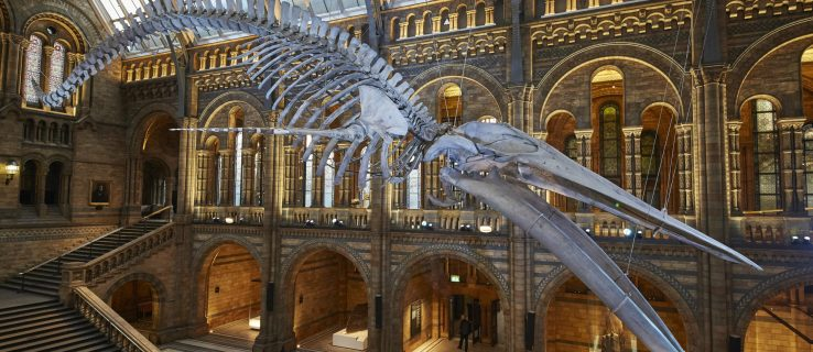 blue_whale_national_history_museum