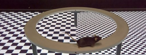 holodeck_for_mice_flies_fish