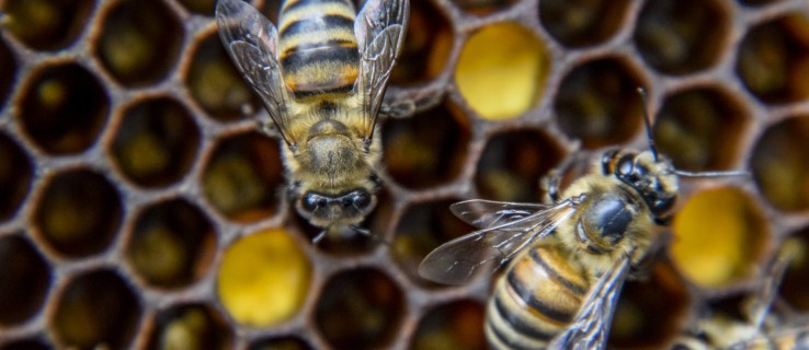 Humans and bees are more similar than you think