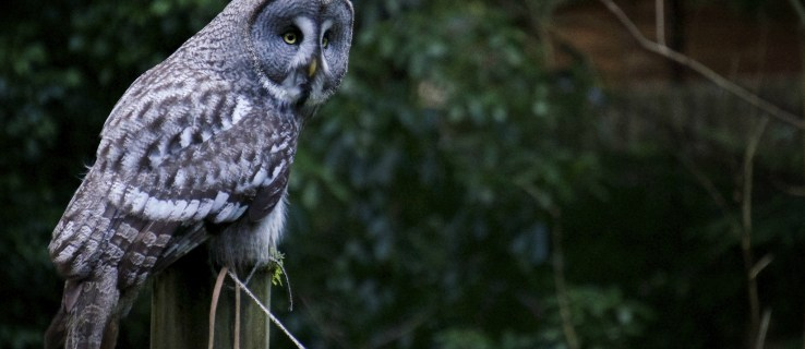 Owl wings could be the answer to noise pollution