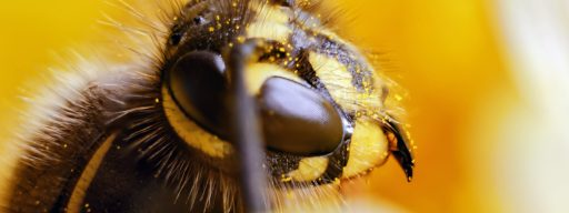 whats_the_point_of_wasps_turns_out_they_do_a_lot_more_than_you_think_-_1