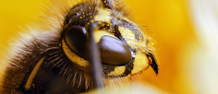 What's the point of wasps? Turns out, they do a lot more than you think