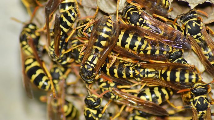 whats_the_point_of_wasps_turns_out_they_do_a_lot_more_than_you_think_-_4