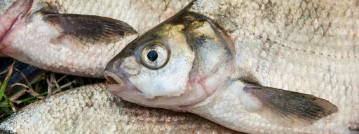 you_could_soon_be_eating_fish_chipped_with_biodegradable_microsensors_
