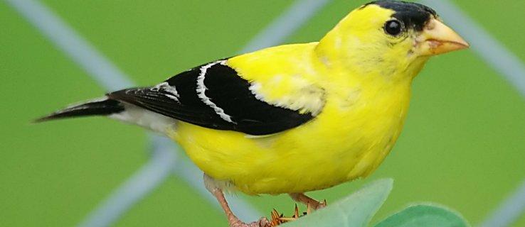 bird_sing_machine