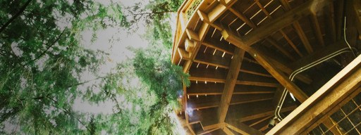 microsoft_treehouse_1
