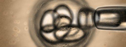 stem-cell_skin