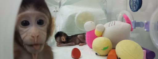 monkeys_cloned_in_chinese_laboratory_for_the_first_time