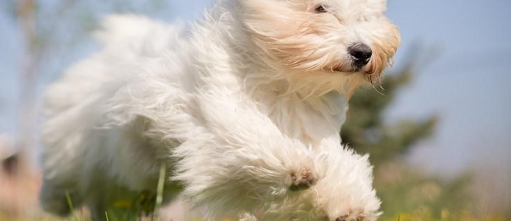 Copycat, copydog: Is it ethical to clone your dead pet?