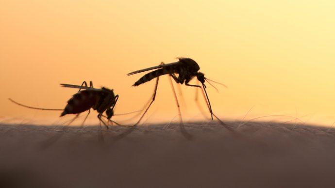 crispr_genome_editing_hurts_mosquitoes_spread_of_malaria_-_1