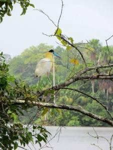 Faune Amazonie
