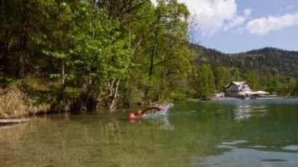 Im Thumsee fühlt sich der Openwater-Schwimmer wie der sprichwörtliche Fisch im Wasser - von denen es hier übrigens auch jede Menge gibt.