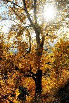 when-to-come_autumn2