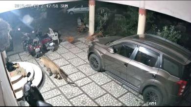 فهد يهاجم كلباً