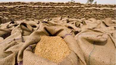 النبك الزراعي استلم ملايين الجوالات من القمح
