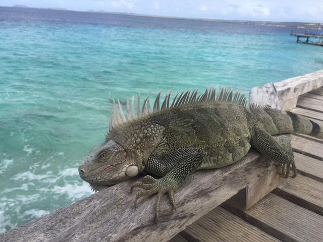Windsock Bonaire