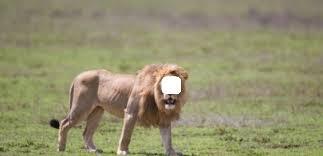 Syaiban ar-Ra'i Mengelus Telinga Seekor Singa