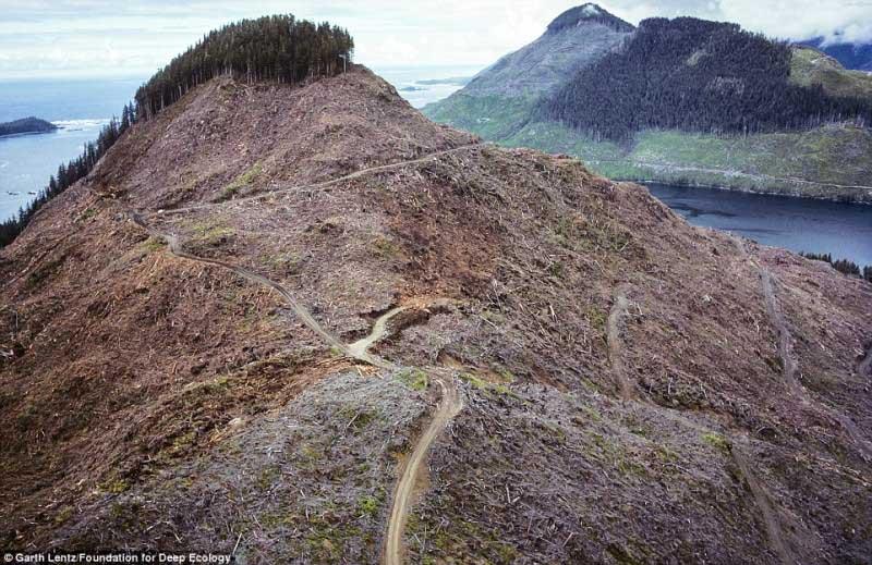 Desflorestação no Canadá
