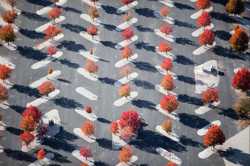 19. Árvores plantadas em um estacionamento