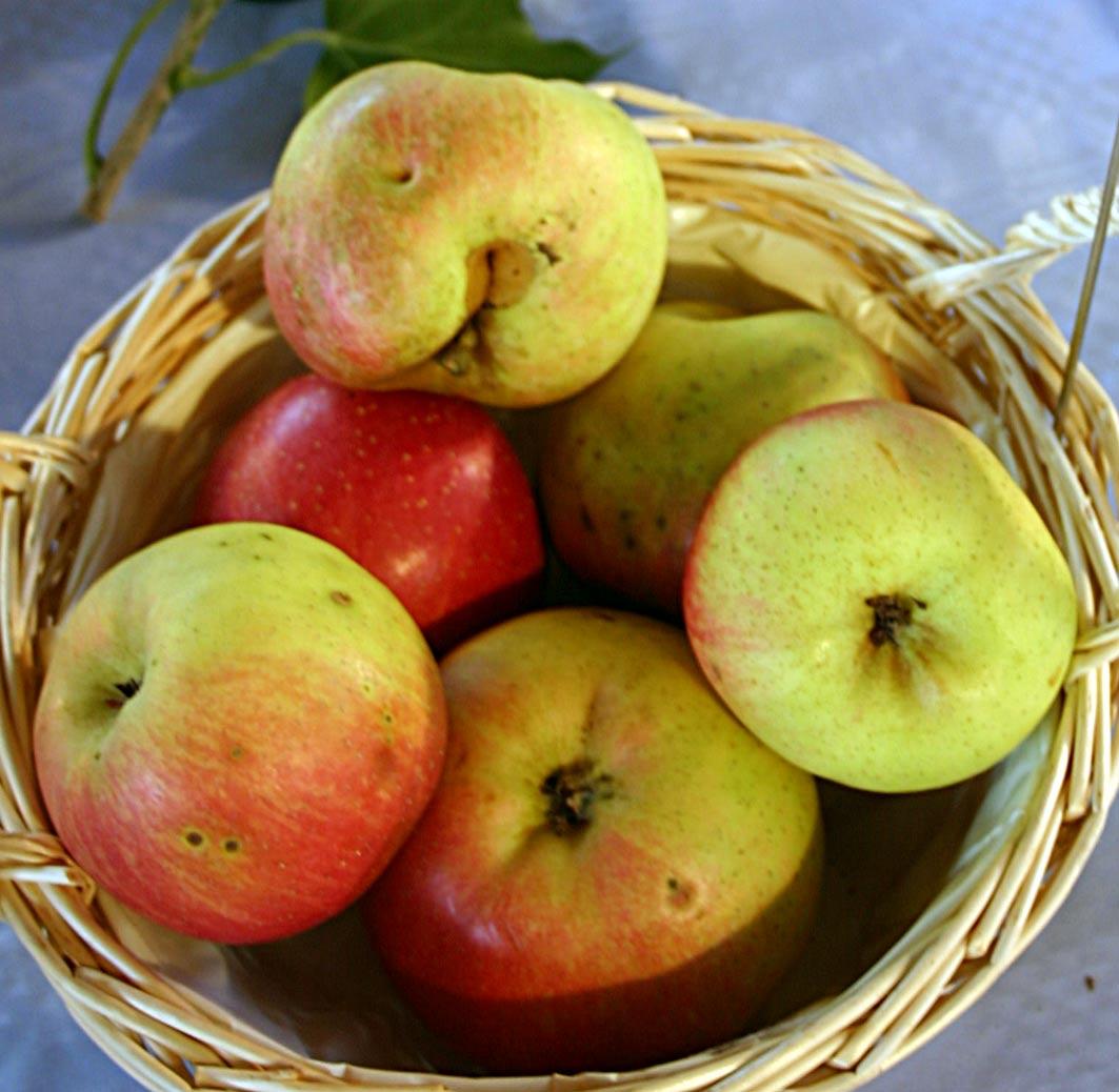 Saftpressen – Bringt eure Äpfel!