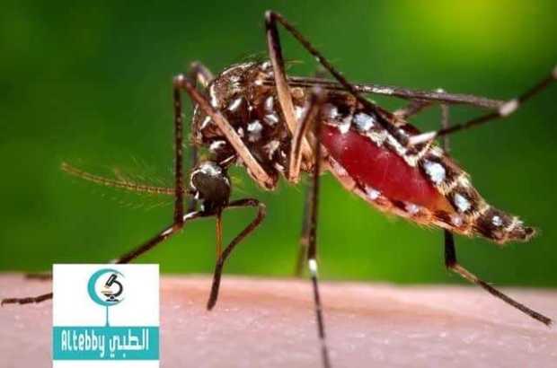 منظمة الصحة العالمية تحزر من انتشار فيروس يحتمل انه يتلف أدمغة الأجنة