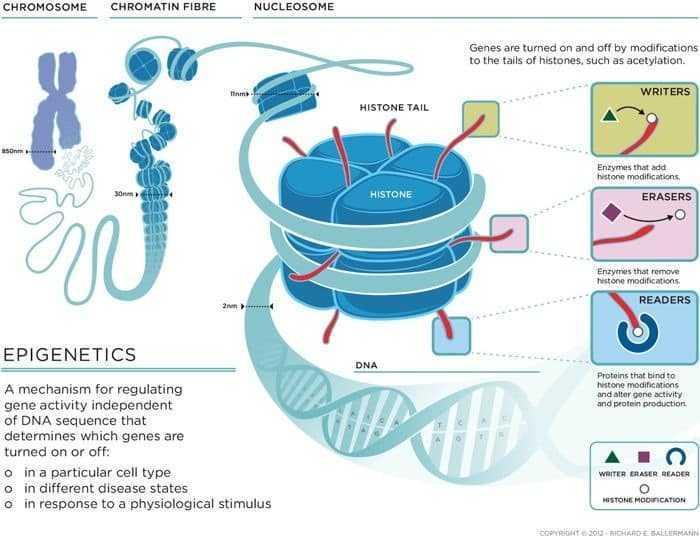 علم ما فوق الوراثة Epigenetics