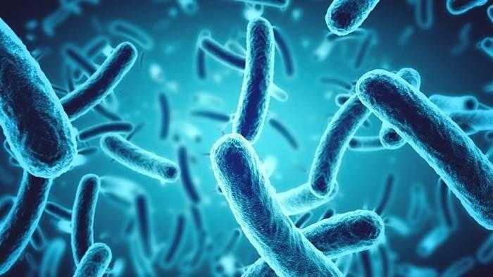 تقرير أممي جديد يحذر من ارتفاع كبير في مستوى البكتريا المقاومة للمضادات الحيوية