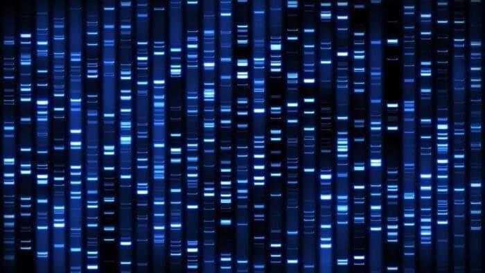 البصمة الوراثية - DNA fingerprinting