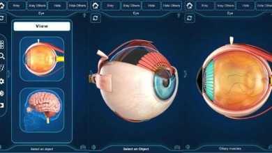 التركيب التشريحي للعين My Eye Anatomy