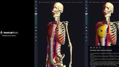 تطبيق teamLabBody لعرض التركيب التشريحي للإنسان