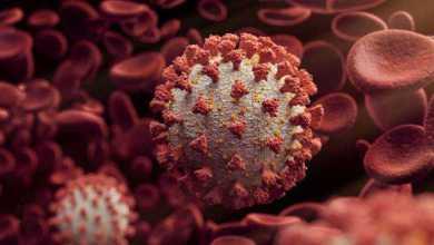 سلالة جديدة من فيروس كورونا