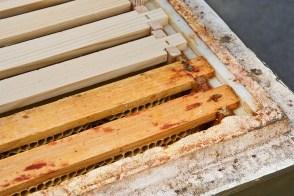 Der geöffnete, leere Bienenstock