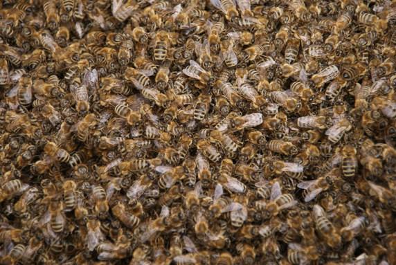 1000e Bienen ...