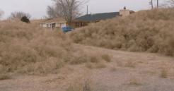 15-foot high pile of tumbleweeds