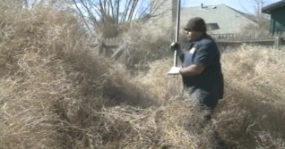 Roswell, New Mexico city crews work to clean up the tumbleweed disaster
