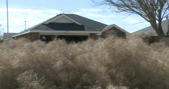 Roswell, New Mexico buried under tons of tumbleweeds