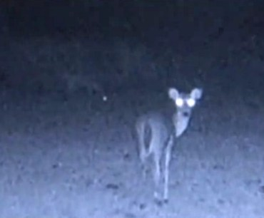 Deer appear before deer-cam camera - something seems to catch their attention