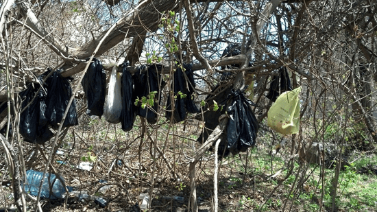 Bodies of dead cats in plastic bags hung from tree in Yonkers, New York