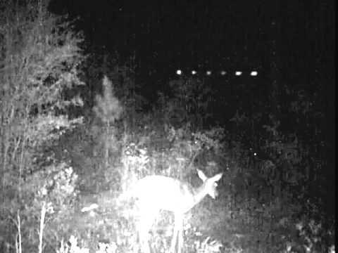 Huge, lit UFO over Georgia caught on GameCam flying over feeding deer