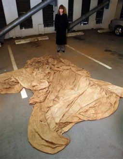 Parachute discovered that could have been the one used by D.B. Cooper skyjacker