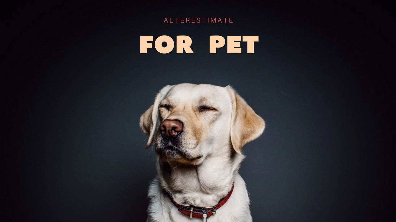 https://i1.wp.com/www.alterestimate.com/wp-content/uploads/2017/09/category-for-pet.jpg