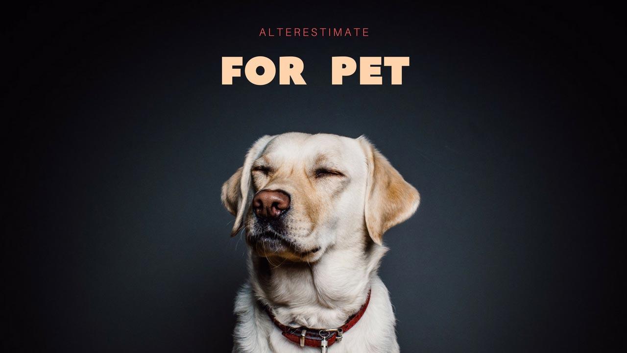 https://i1.wp.com/www.alterestimate.com/wp-content/uploads/2017/09/category-for-pet.jpg?ssl=1