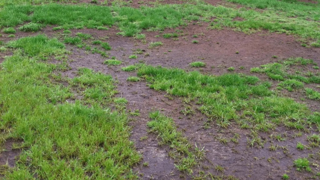 Lawn in bad condition