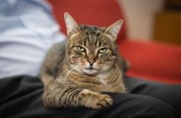 Kattencafe Groningen