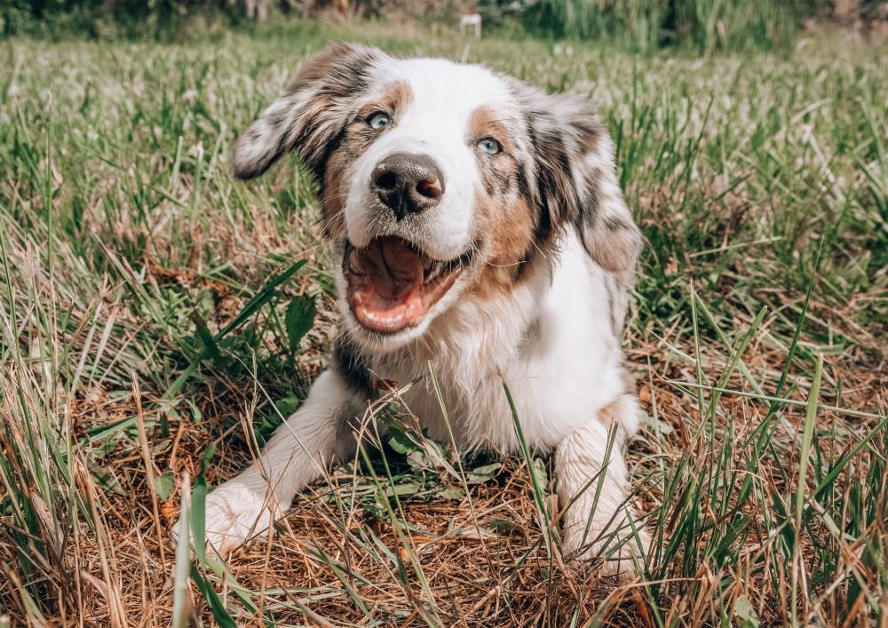natural allergy supplement for dogs